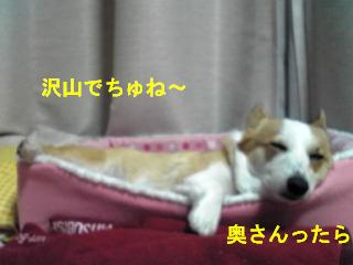 201001116-4Image080.jpg