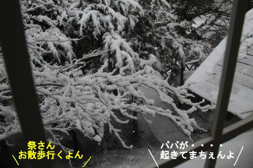 20100301-8.jpg