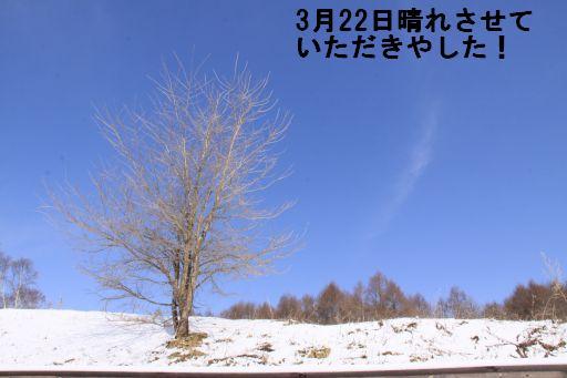 20100318-14.jpg