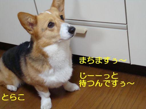20100318-6.jpg