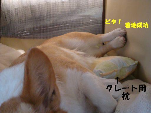 20100322-8.jpg