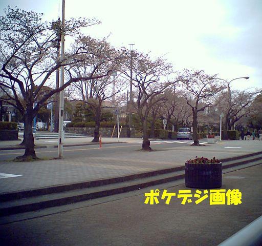 20100324-12.jpg