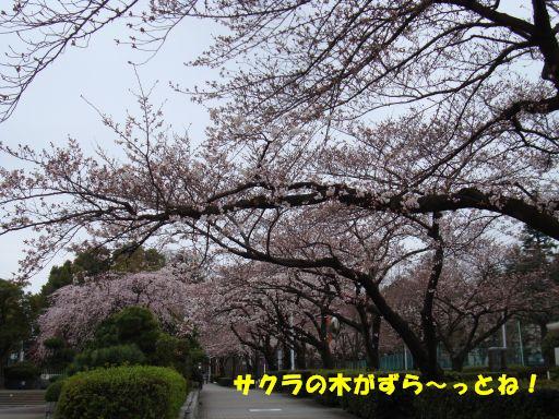 20100324-13.jpg