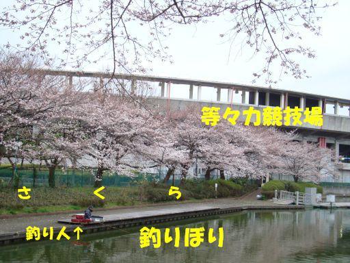 20100324-14.jpg