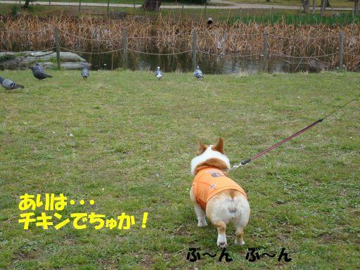 20100324-16.jpg
