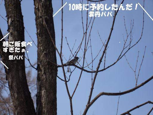 20100417-10.jpg