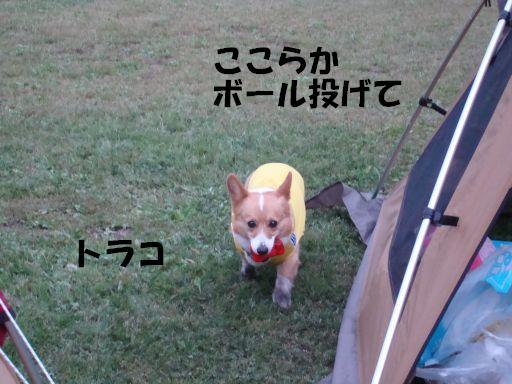 20100510-12.jpg