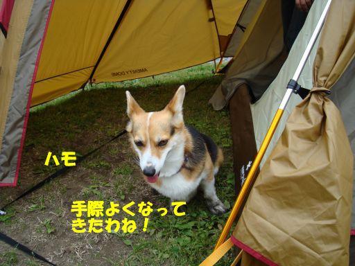 20100510-19.jpg