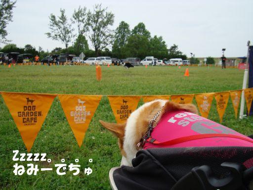 20100531-23.jpg