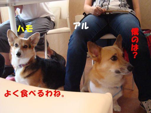 20100617-22.jpg