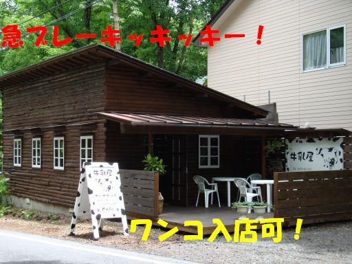20100621-15.jpg