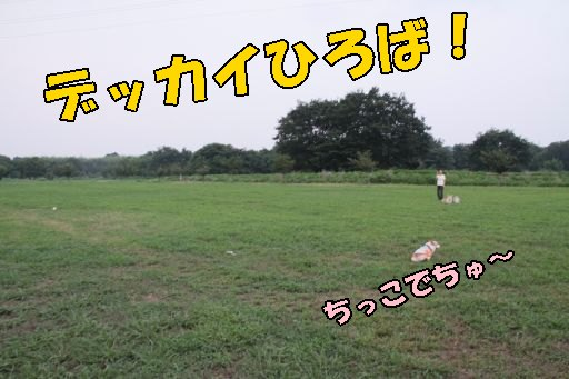 20100805-18.jpg