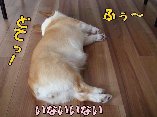 20100819-A1.jpg