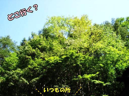 20100905-4.jpg