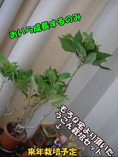 20100913-4.jpg