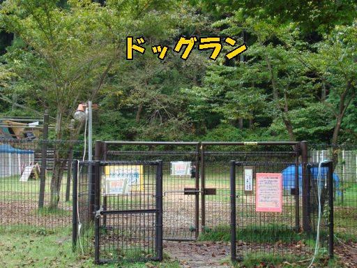20101007-16.jpg