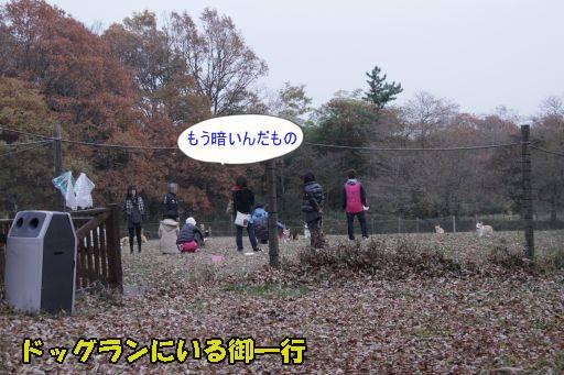 20101113-1.jpg