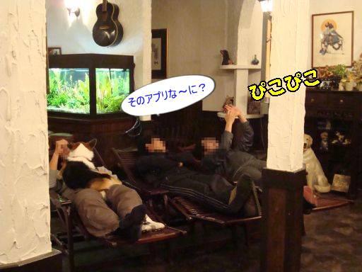 20101113-5.jpg