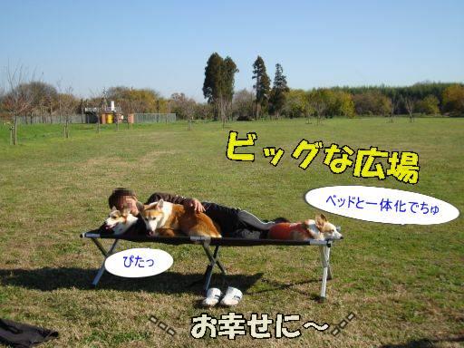 20101205-17A.jpg