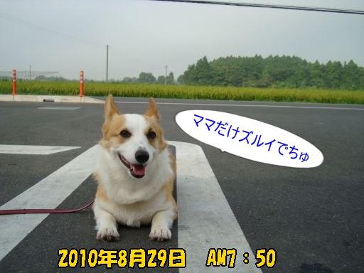 2010827-1.jpg