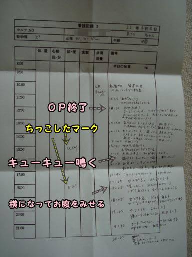 20110410-11.jpg