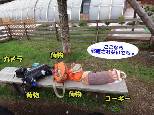 20110615-24.jpg
