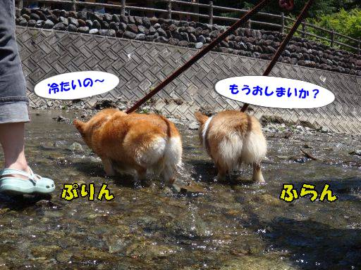 20110717-6A.jpg
