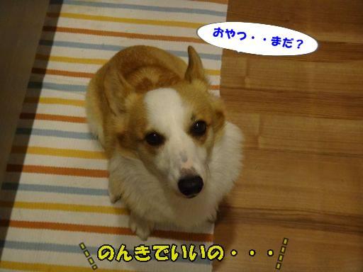 20110719-9.jpg