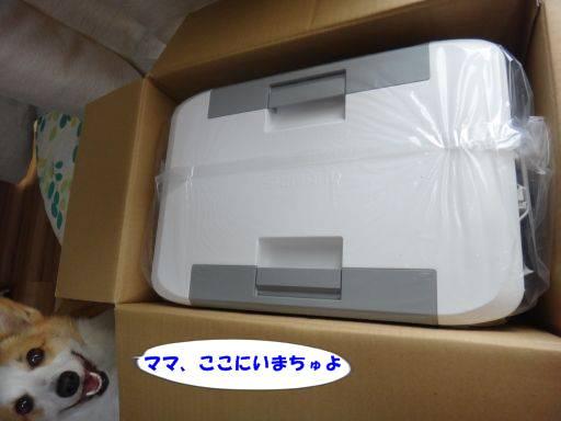 20110729-3.jpg