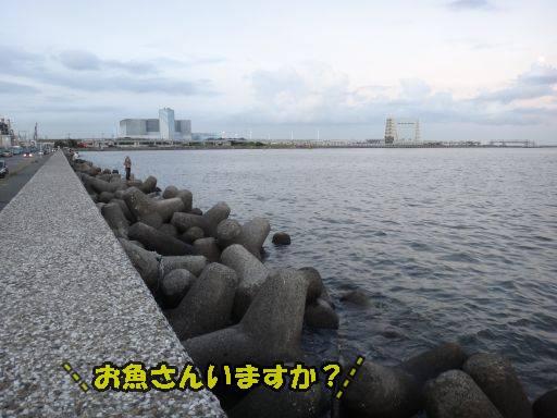20110913-3.jpg