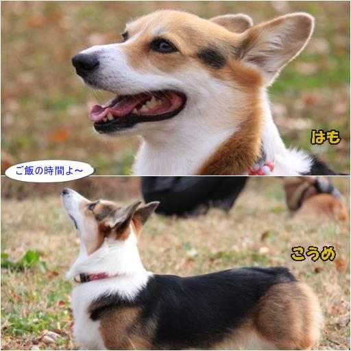 20111117-11.jpg