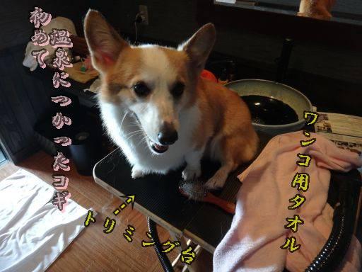 20111121-11jpg.jpg