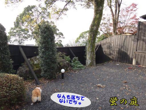 20111129-13.jpg