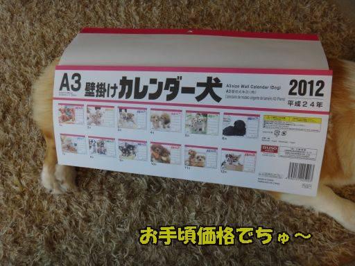 20111201-6.jpg