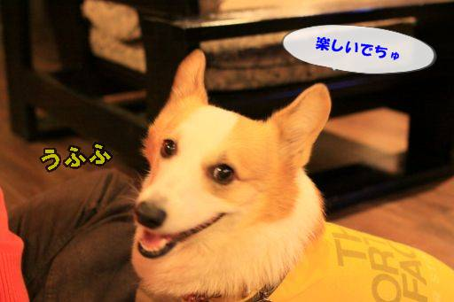 I20111127-15.jpg