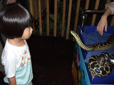 まだら模様の大蛇