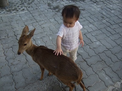ちび子鹿に触る