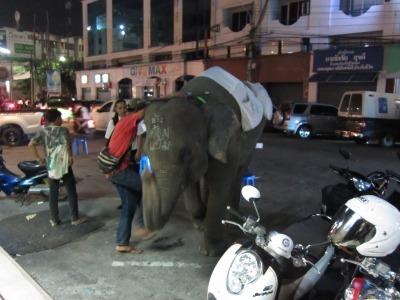 象との遭遇1