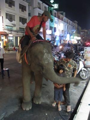 象との遭遇3
