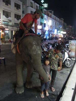 象との遭遇4