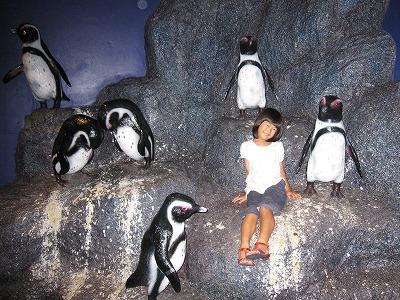 ペンギンとお姉ちゃん