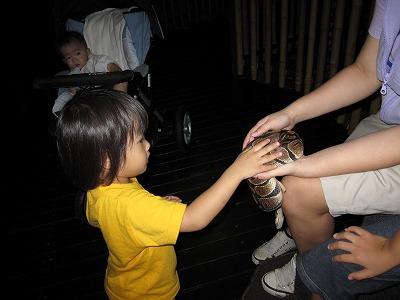 ヘビに触るちび子