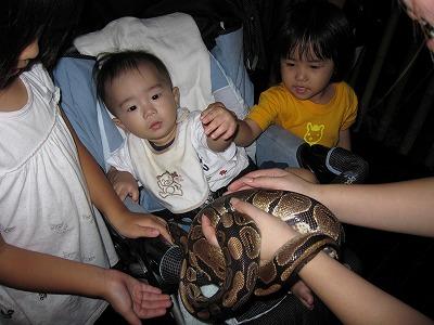 ヘビを触らされる赤ちゃん1