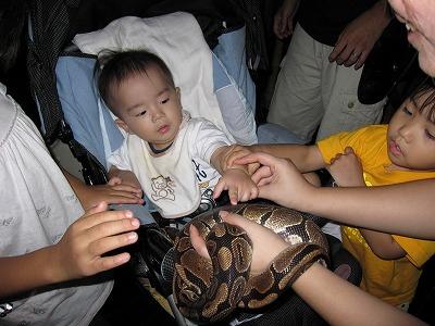 ヘビを触らされる赤ちゃん2