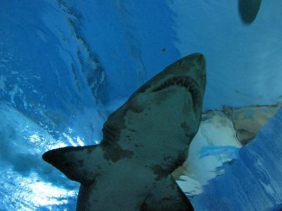 サメを見上げる