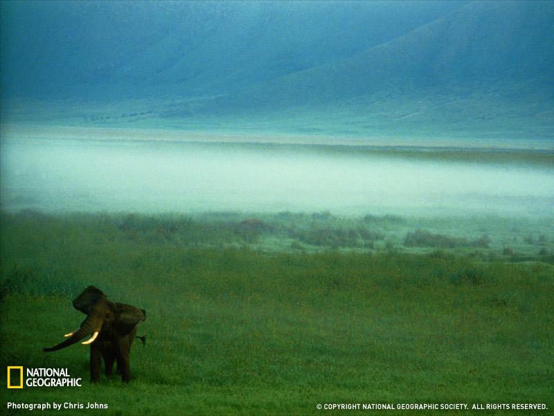 african-elephant-tanzania-051209-sw.jpg