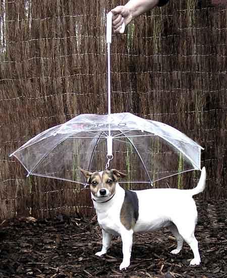 umbrella07.jpg