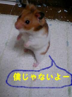 p-hamsuke11.png