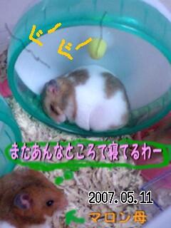 p-happy5.jpg