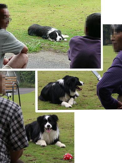 0620-17退屈犬達